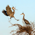 Building the Nest
